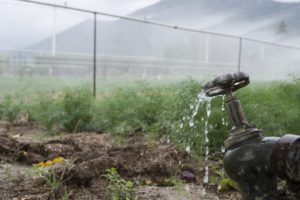 pipes-and-tap-water-for-watering-plants