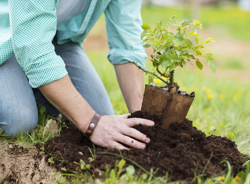 young-man-planting-in-the-garden