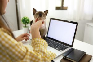 coronavirus-business-woman-working-from-home-with her cat